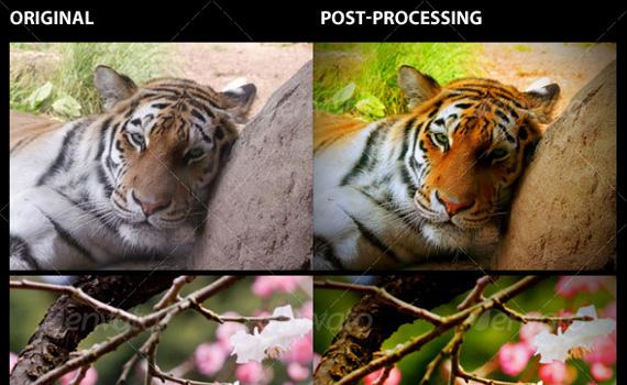 Nature-premium-photoshop-actions