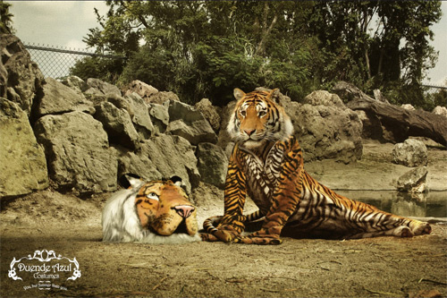 costume tiger