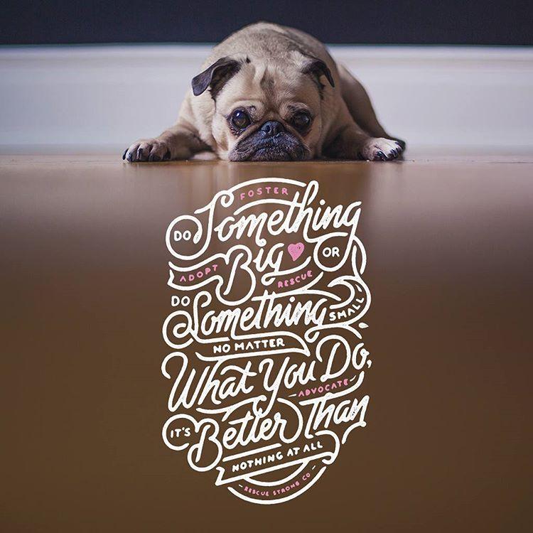 dog typography design